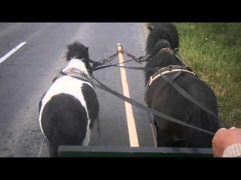 Delta-Két pejló Újudvar 2015 videó letöltése