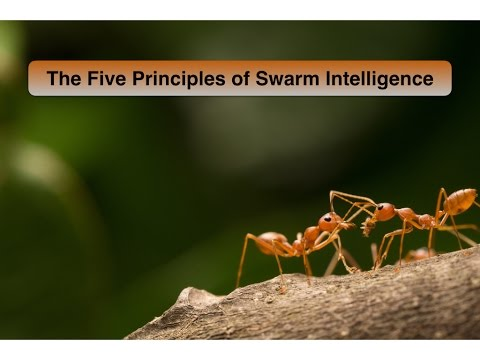 Five Principles of Swarm Intelligence