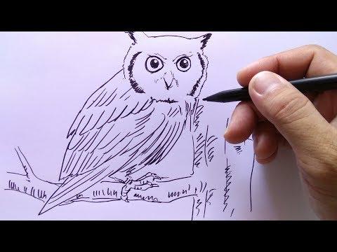 Cara Menggambar Burung Hantu Youtube