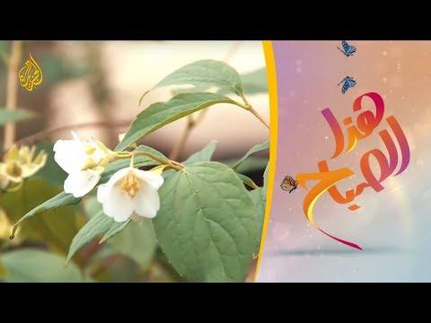 مهرجان عيد الورد بمحافظة أريانة التونسية  - نشر قبل 2 ساعة