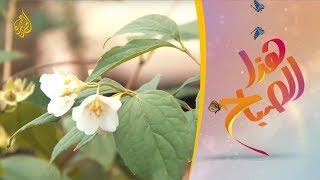 مهرجان عيد الورد بمحافظة أريانة التونسية 🌅