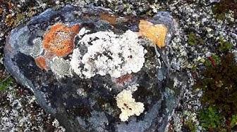 Tunturivaellus Mallan luonnonpuistossa Kilpisjärvellä