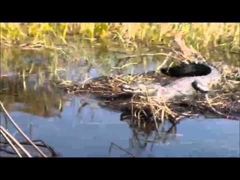 Chief's Island  Maun  Botswana