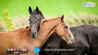Atlarda Arpalama Nedir?