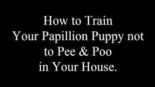 Papillons: Potty Training Papillon Puppies  - FREE MINI Course Papillons