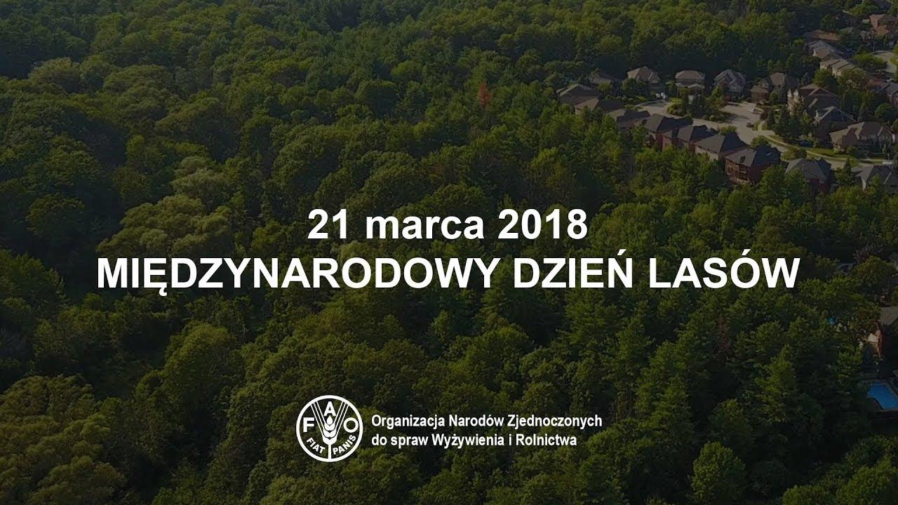Międzynarodowy Dzień Lasów. 21 marca 2018