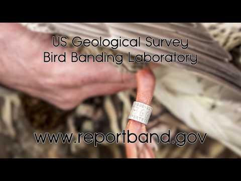Bird Bands