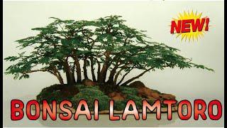 BONSAI LAMTORO / PETAI CINA UNIK & KREATIF || Leucaena leucocephala