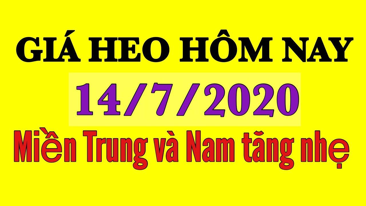 Giá heo hơi ngày hôm nay 14/7/2020 | Tăng nhẹ tại miền Trung và miền Nam