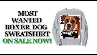 Most Wanted Boxer Cute Funny Dog Sweatshirts - Men's, Women's, Kid's - Black, Grey, Dark Heather