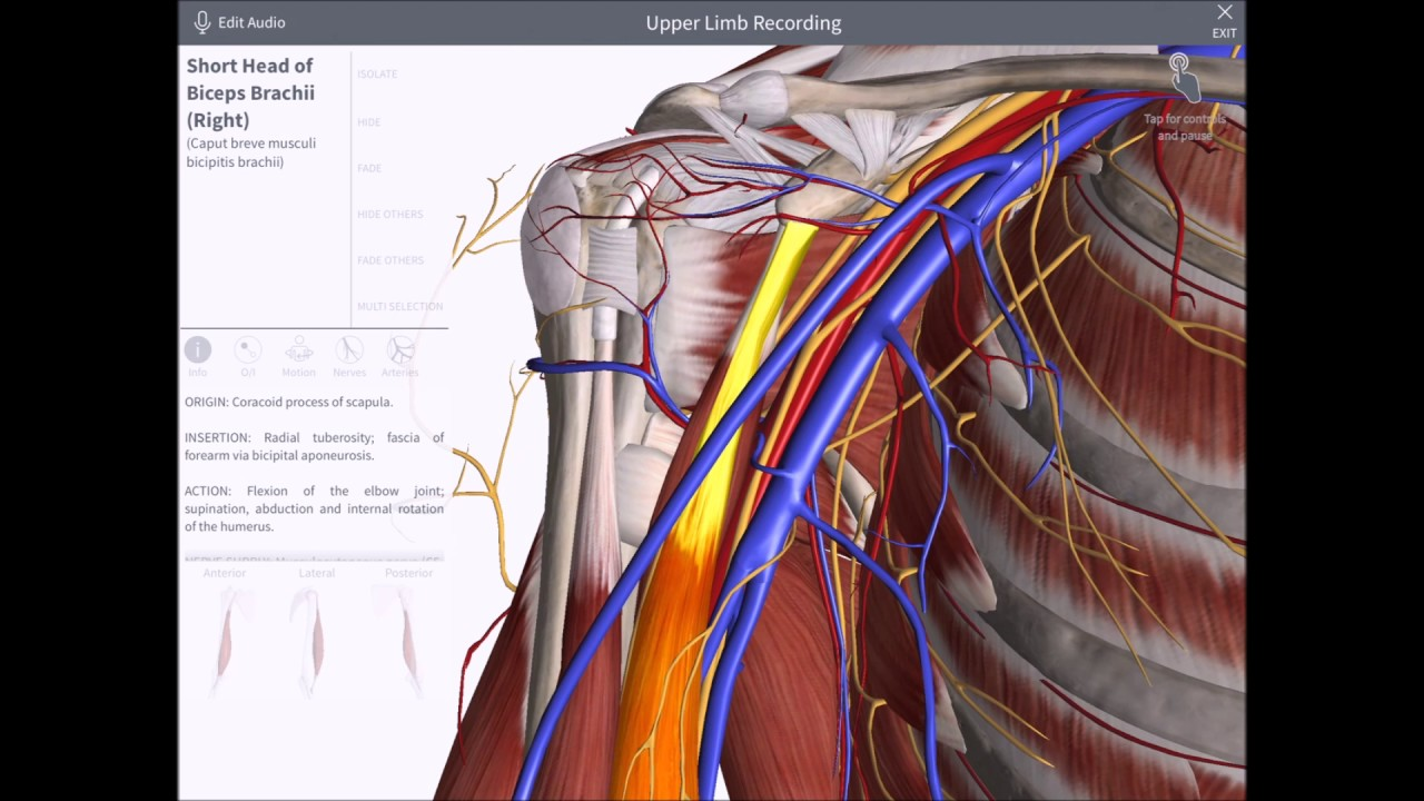 Anatomia 3D de Axila - YouTube