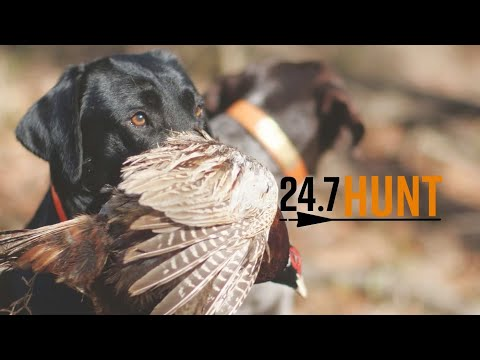 Quail Hunting - 24.7Hunt Georgia Pines - Season 1 Ep.5