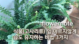 식물 (특히 고사리류) 잎 마르지않게 습도 유지하는 비…