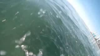 Опасный спорт   серфинг  Никогда не знаешь, что плавает под тобой
