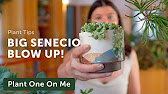 ☝️Plant Tips - Plant One On Me ☝️