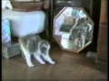 humor Gatos gats Engraçados