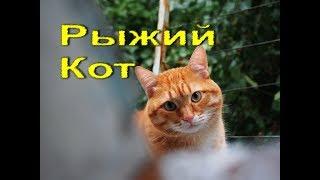 Рыжий кот и щенки