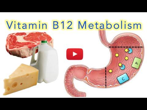 ✔ Vitamin B12 Metabolism - MADE EASY