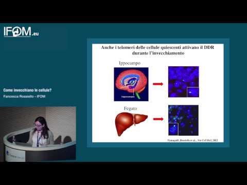 Come invecchiano le cellule? - Francesca Rossiello IFOM