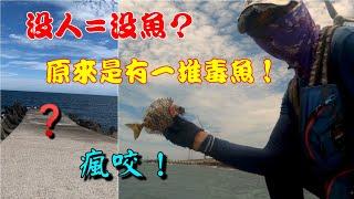 包堤毒魚越釣越大,還釣到沒見過的魚,瘋咬一波!