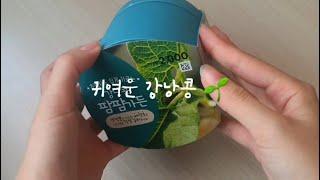 [DAILY] 강낭콩 키우기 1편
