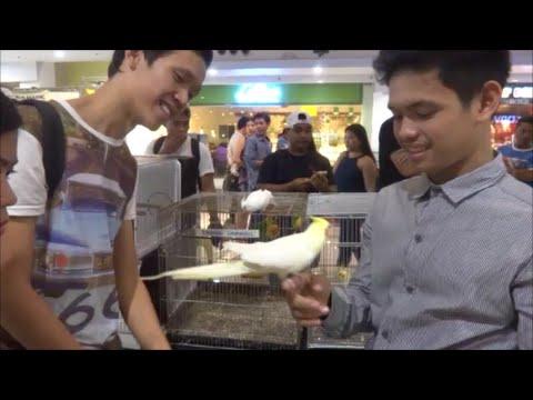 J Mall Exotic Animal Exhibition
