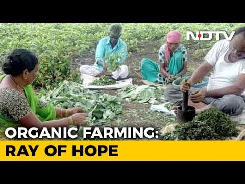 Risk-Taking Entrepreneurs Help Farmers Switch To Organic Cultivation