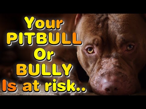 ALLERGIC REACTION in dogs… Your BULLY is at RISK!!