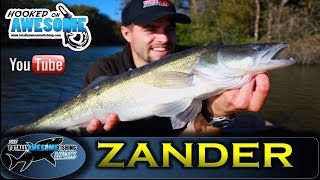 ZANDER FISHING tips for BEGINNERS   TAFishing Show