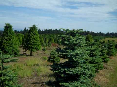 80 acres for salexmas tree farm 7 minutes to salemview the cascadeslove it here - Christmas Tree Farms For Sale