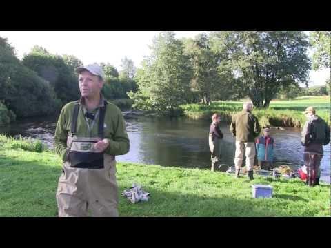 DTU Aqua video film: Da  ørrederne kom tilbage til Gudenåen.mpeg