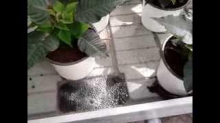 garden ceder dolaptsis