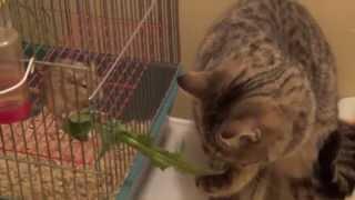 Дружба между кошкой и мышкой существует!