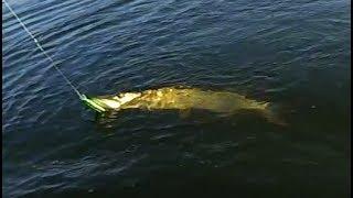 Рыбалка на спиннинг в затоне реки Оки Рыбалка на Воблеры