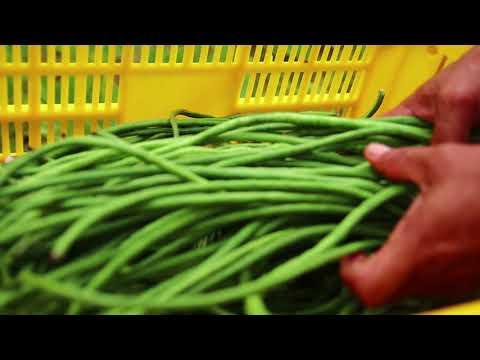 Tubungan, Iloilo: National Organic Achiever (Local Government Unit Category)
