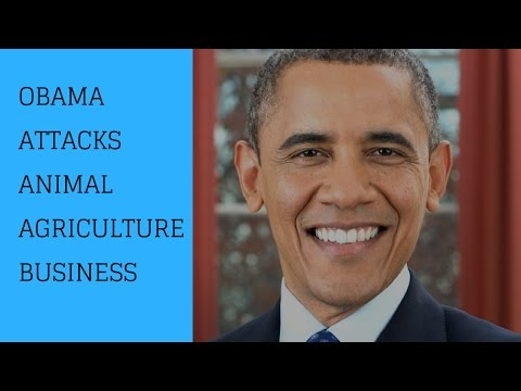Obama Attacks Animal Agriculture Business