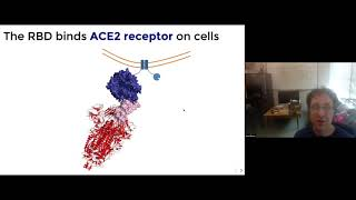 Science of COVID-19: Evolutionary Potential of the SARS-CoV-2 Receptor Binding Domain (RBD)