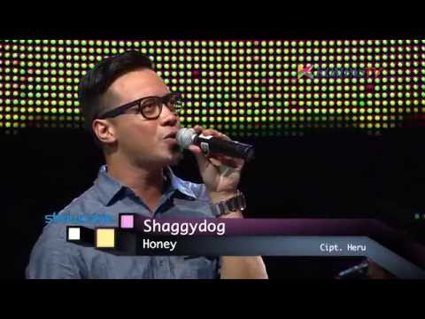 Shaggy Dog - Honey