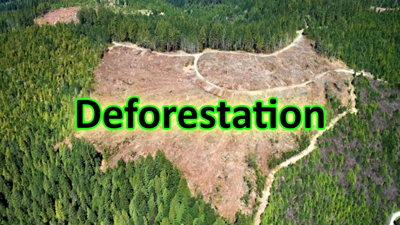 deforestation limitations Further, limitations of existing mitigation strategies and the convergence of public and private sector commitments to reduce deforestation (eg.