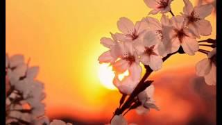 Nichtzusammen - Sakura (Original Mix)