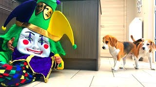 Dogs Vs Funny Clown Prank  | Louie The Beagle