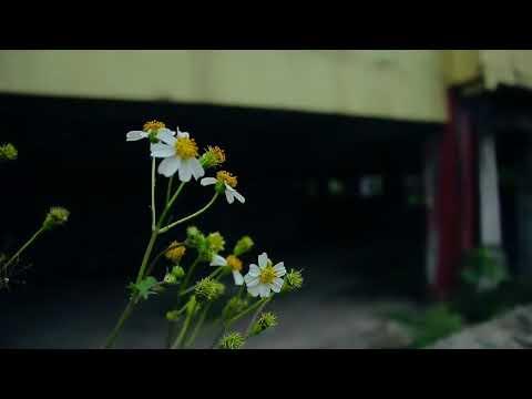 Jembatan merah - senyap (official video)