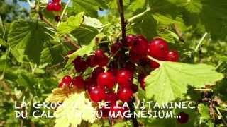 Les petits fruits rouges et noirs
