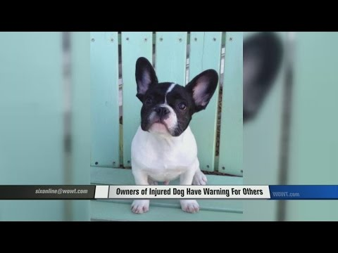 Dog Owners Want Everyone to Know Warning Signs of Intervertebral Disc Disease