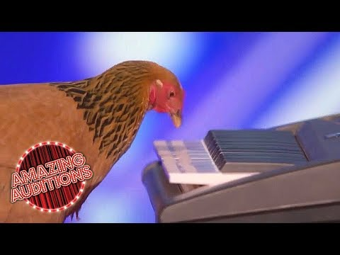 Americas Got Talent 2017 -  Funniest / Weirdest / Worst Auditions - Part 1