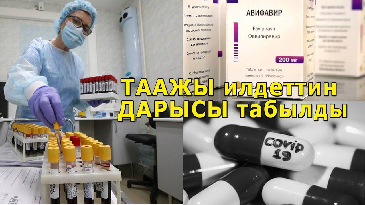 Бишкекте АЙЫККАНДАР көбөйдү