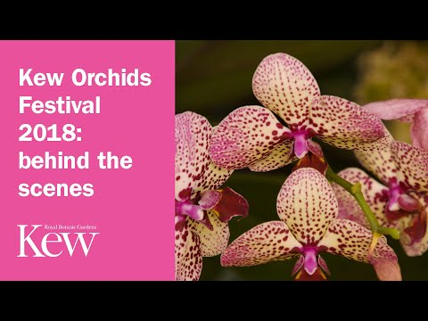 Kew Orchids Festival 2018: behind the scenes