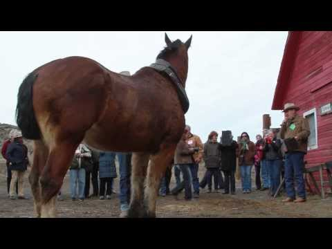Cowboy John Tours 2014 * Elko, NV HD