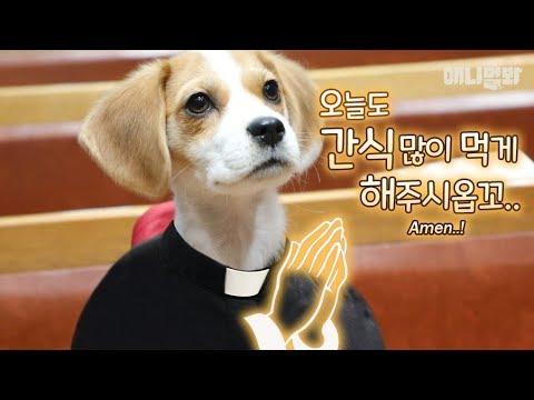 열혈사개 1화 l A DEVIL Dog Lives In Church?! EP1