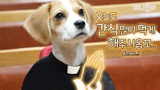 열혈사개-1화-l-a-devil-dog-lives-in-church-ep1